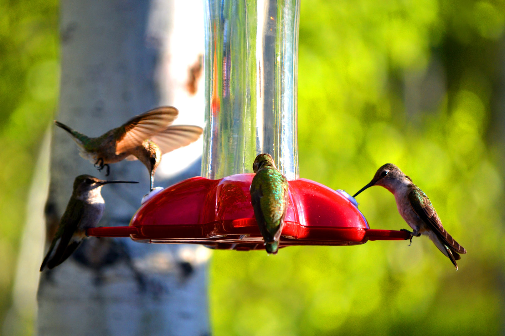 Collection performing daily wondrous hummingbirds by techgnotic on hummingbirds by loxymcd biocorpaavc Gallery