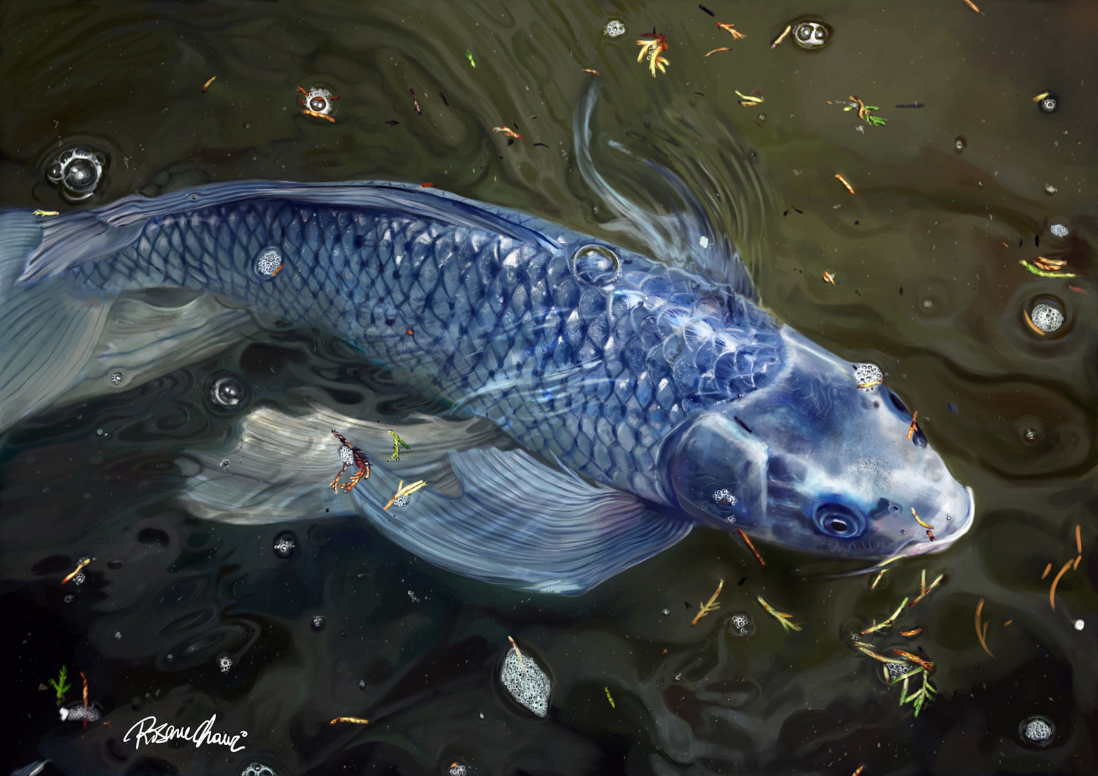 Collection nature 39 s show fish by techgnotic on deviantart for Coy fish painting