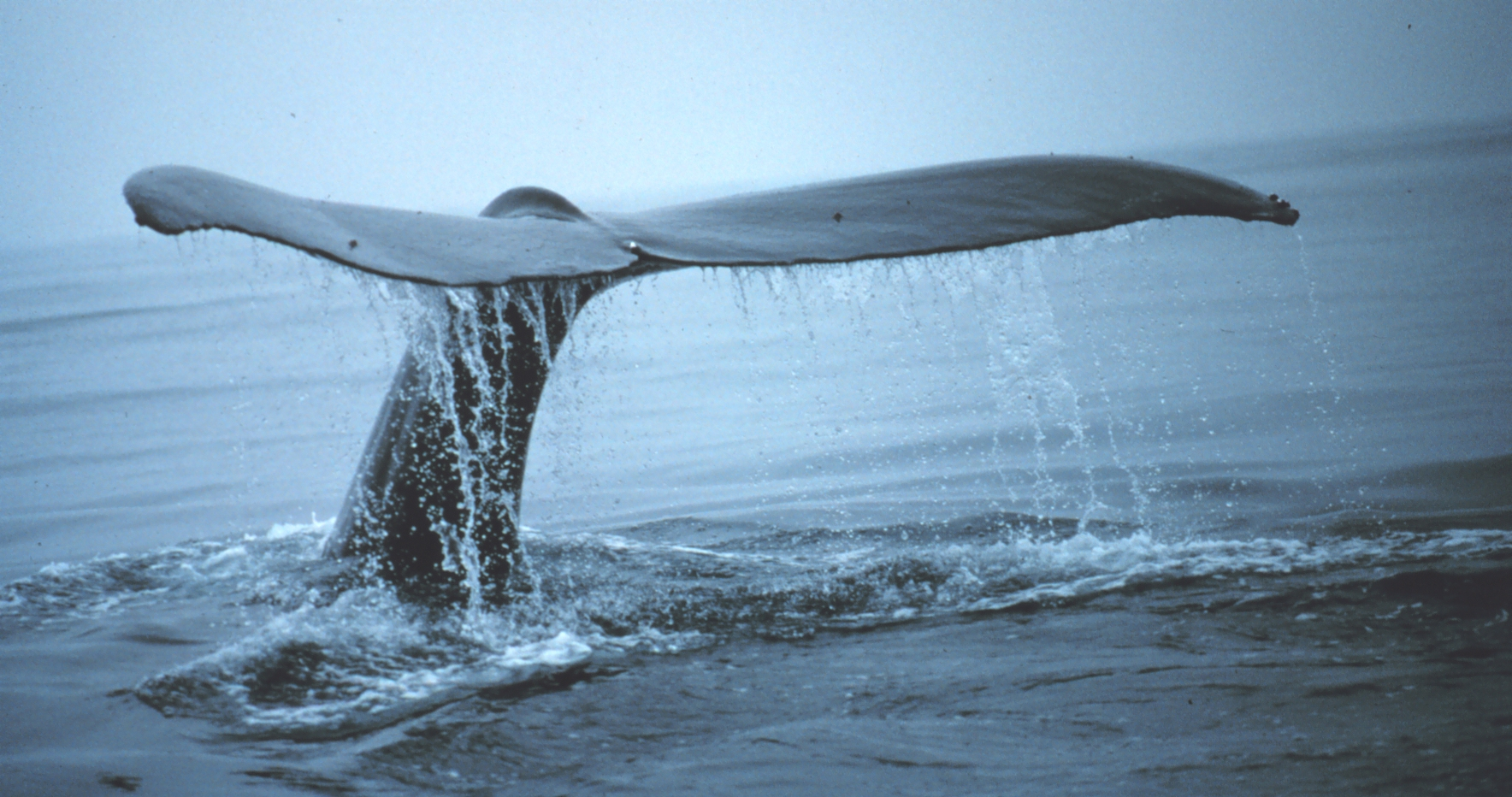 """empathic responce on the whale rider Chapter 3: empathy: getting people to feel is as important   you can dig deep into your own response data to see how your tests  people  who see """"gory"""" scenes of whale hunting (versus less vivid content) are  the  heath brothers call this side of the brain """"the rider,"""" who clings onto the  elephant's."""